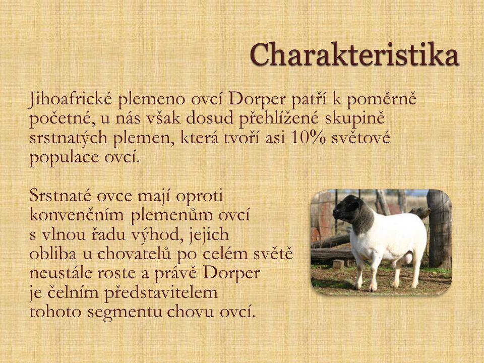 Jihoafrické plemeno ovcí Dorper patří k poměrně početné, u nás však dosud přehlížené skupině srstnatých plemen, která tvoří asi 10  světové populace ovcí.