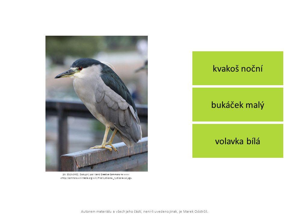 Autorem materiálu a všech jeho částí, není-li uvedeno jinak, je Marek Odstrčil. kvakoš noční volavka bílá bukáček malý [cit. 2012-10-02]. Dostupný pod
