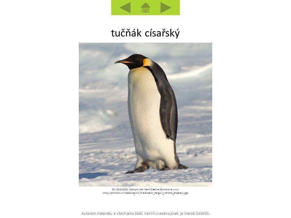 Autorem materiálu a všech jeho částí, není-li uvedeno jinak, je Marek Odstrčil. tučňák císařský [cit. 2012-10-02]. Dostupný pod licencí Creative Commo