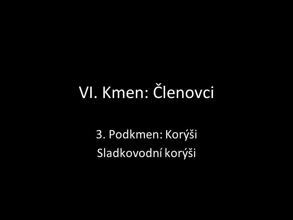 VI. Kmen: Členovci 3. Podkmen: Korýši Sladkovodní korýši