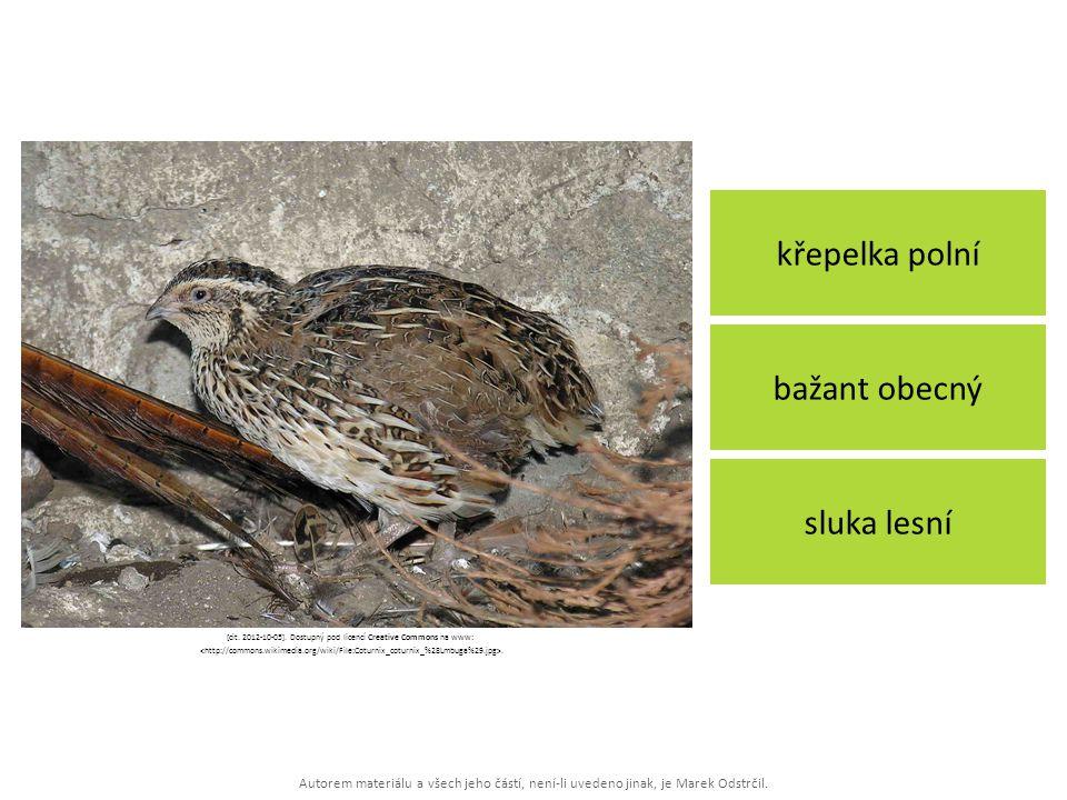 Autorem materiálu a všech jeho částí, není-li uvedeno jinak, je Marek Odstrčil. křepelka polní sluka lesní bažant obecný [cit. 2012-10-05]. Dostupný p