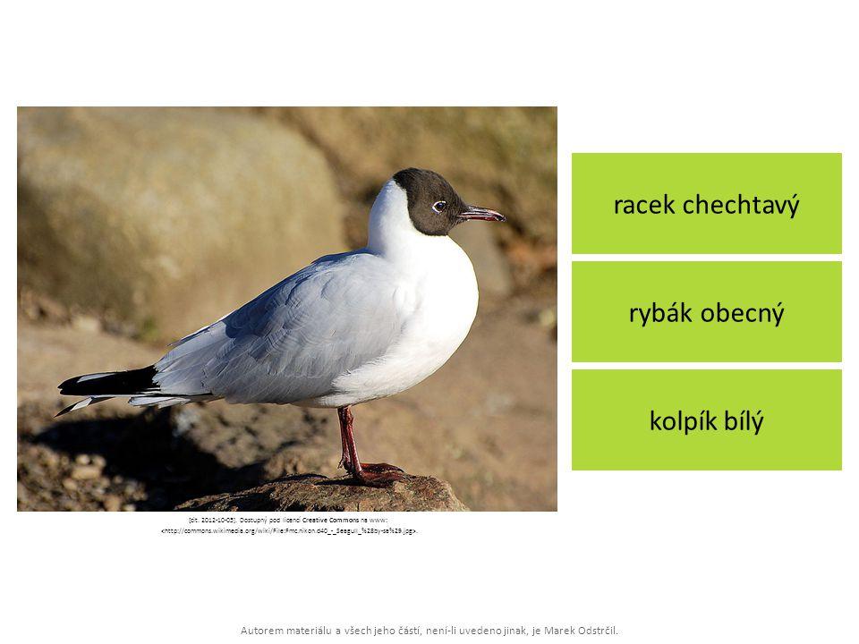 Autorem materiálu a všech jeho částí, není-li uvedeno jinak, je Marek Odstrčil. racek chechtavý kolpík bílý rybák obecný [cit. 2012-10-05]. Dostupný p