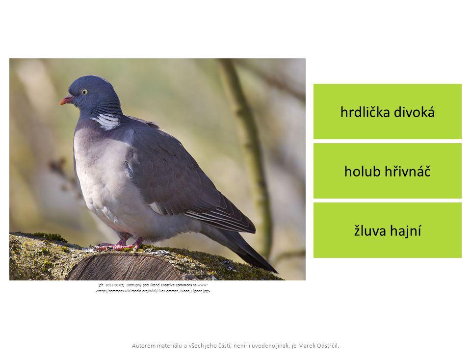 Autorem materiálu a všech jeho částí, není-li uvedeno jinak, je Marek Odstrčil. hrdlička divoká žluva hajní holub hřivnáč [cit. 2012-10-05]. Dostupný