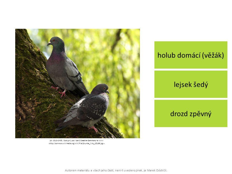 Autorem materiálu a všech jeho částí, není-li uvedeno jinak, je Marek Odstrčil. holub domácí (věžák) drozd zpěvný lejsek šedý [cit. 2012-10-05]. Dostu