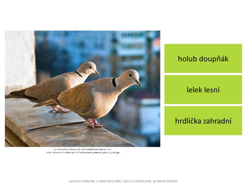 Autorem materiálu a všech jeho částí, není-li uvedeno jinak, je Marek Odstrčil. holub doupňák hrdlička zahradní lelek lesní [cit. 2012-10-05]. Dostupn