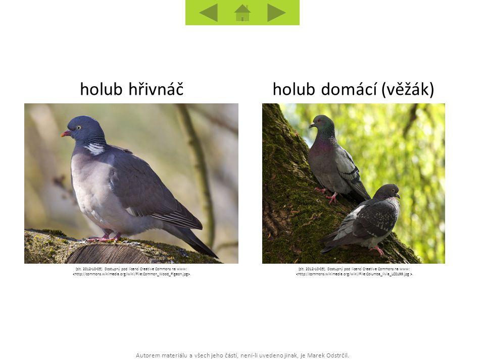 Autorem materiálu a všech jeho částí, není-li uvedeno jinak, je Marek Odstrčil. holub domácí (věžák)holub hřivnáč [cit. 2012-10-05]. Dostupný pod lice