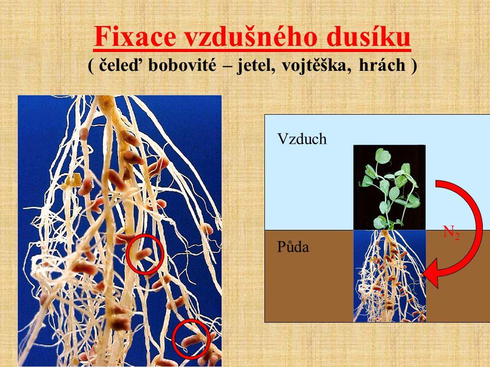 Fixace vzdušného dusíku ( čeleď bobovité – jetel, vojtěška, hrách ) Vzduch Půda N2N2