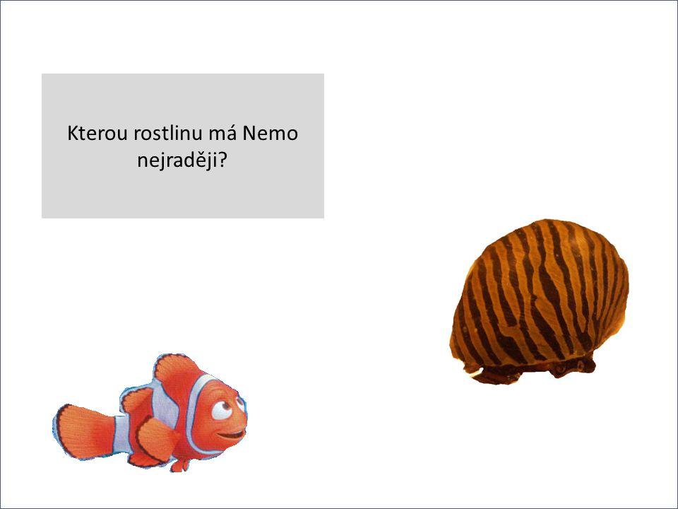 v Kterou rostlinu má Nemo nejraději?
