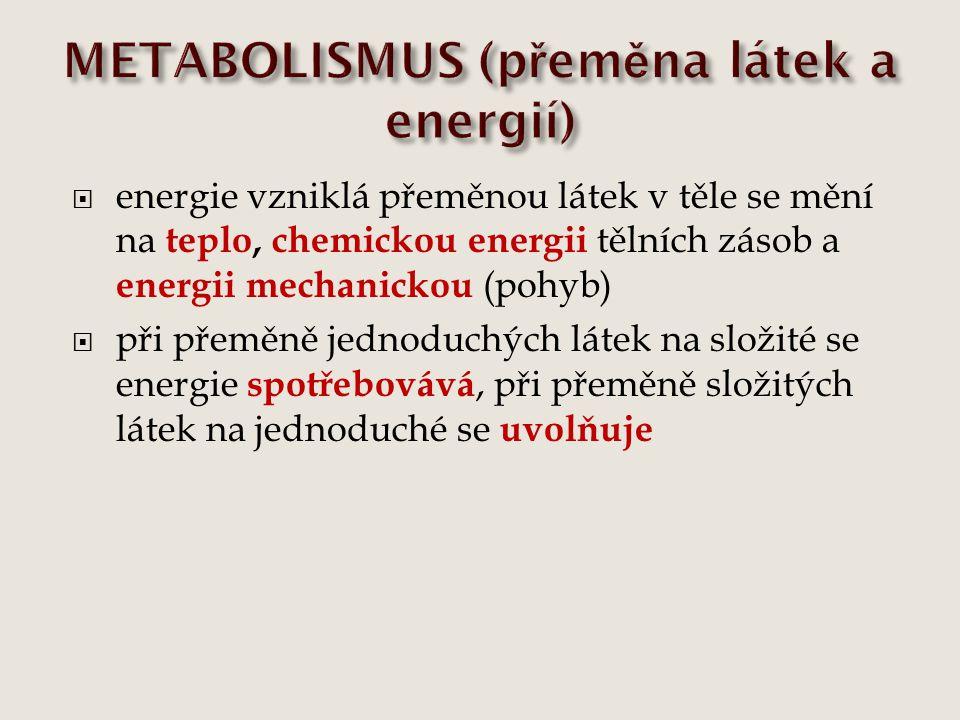 energie vzniklá přeměnou látek v těle se mění na teplo, chemickou energii tělních zásob a energii mechanickou (pohyb)  při přeměně jednoduchých lát