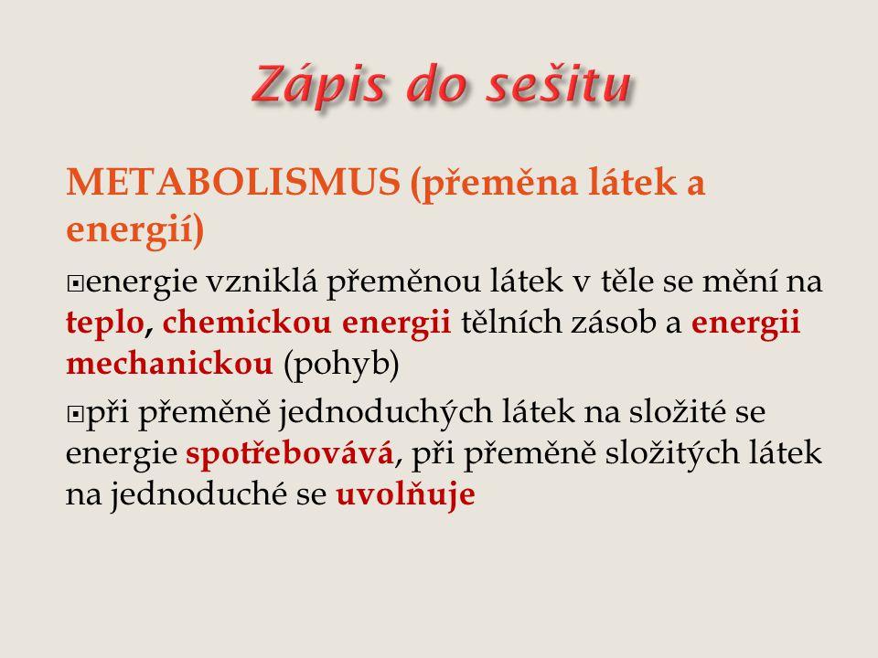 METABOLISMUS (přeměna látek a energií)  energie vzniklá přeměnou látek v těle se mění na teplo, chemickou energii tělních zásob a energii mechanickou