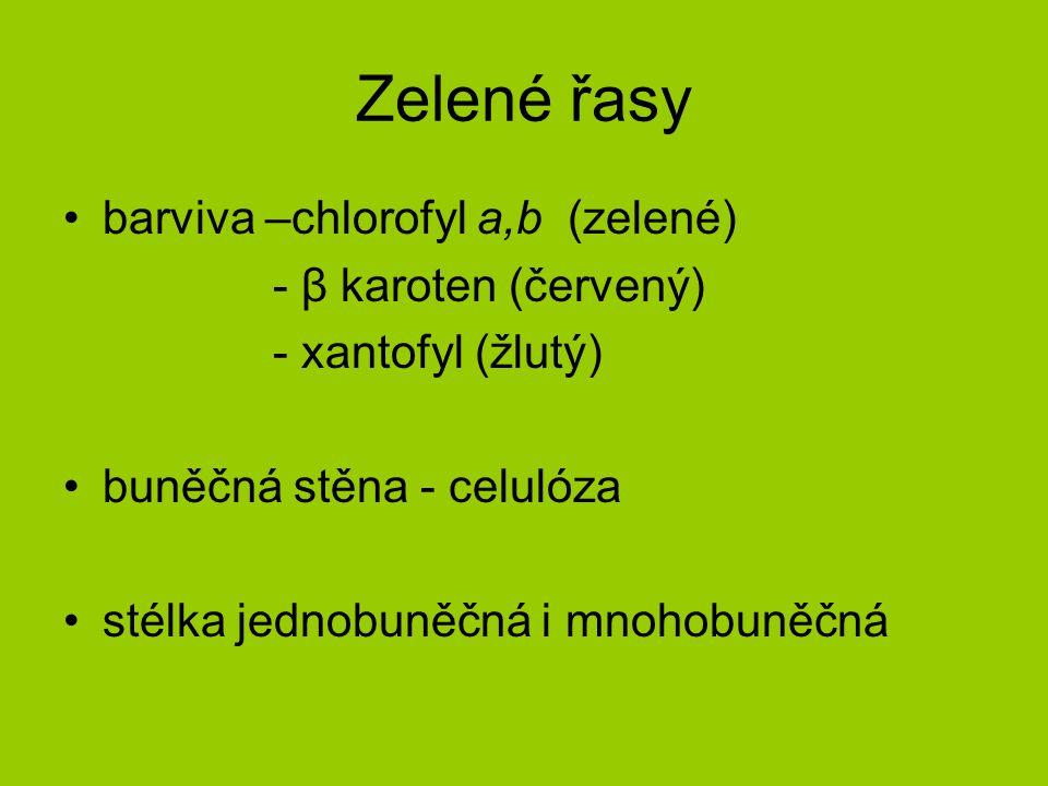 Zelené řasy barviva –chlorofyl a,b (zelené) - β karoten (červený) - xantofyl (žlutý) buněčná stěna - celulóza stélka jednobuněčná i mnohobuněčná
