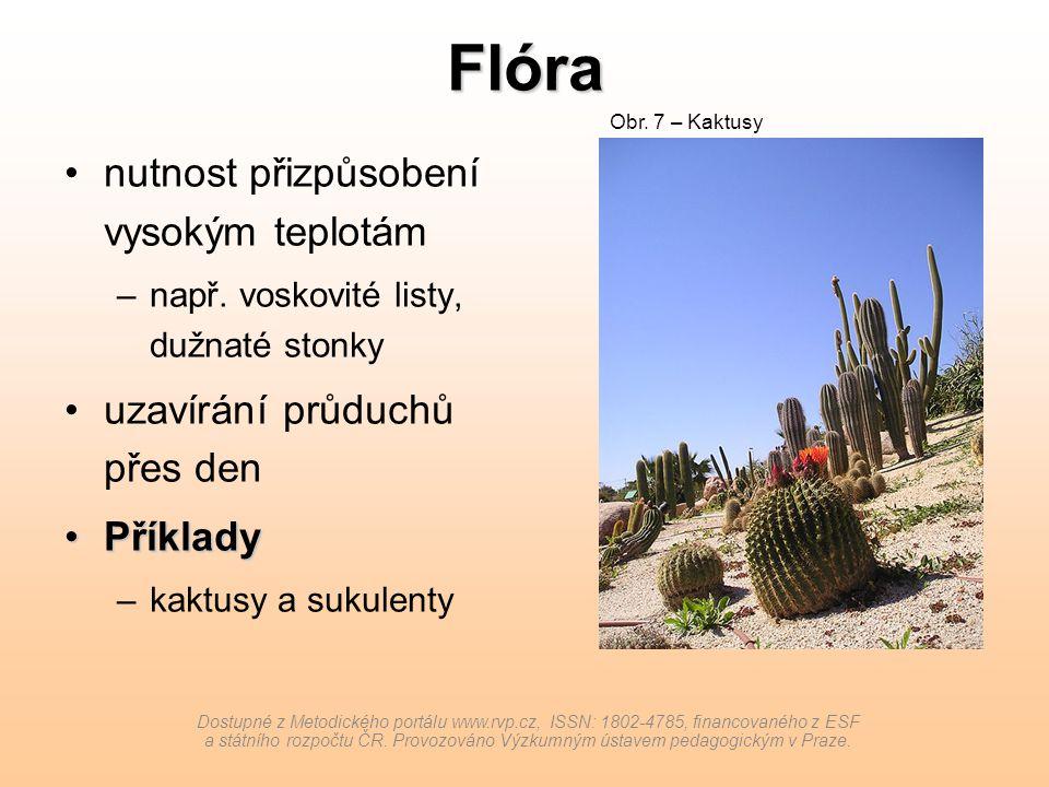Flóra nutnost přizpůsobení vysokým teplotám –např. voskovité listy, dužnaté stonky uzavírání průduchů přes den PříkladyPříklady –kaktusy a sukulenty D