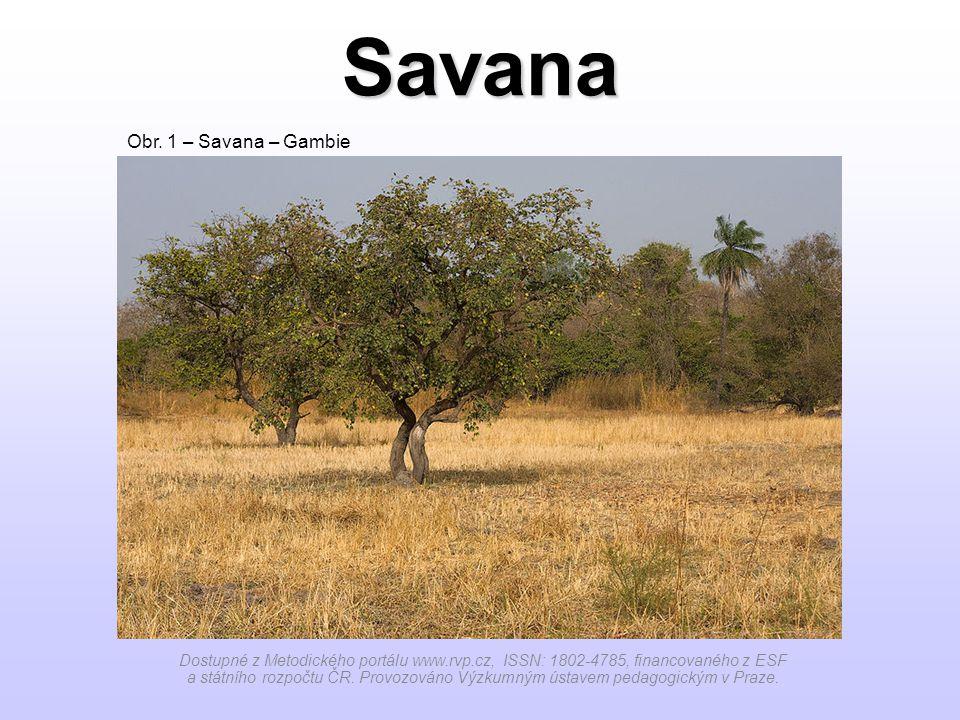 Savana Dostupné z Metodického portálu www.rvp.cz, ISSN: 1802-4785, financovaného z ESF a státního rozpočtu ČR.