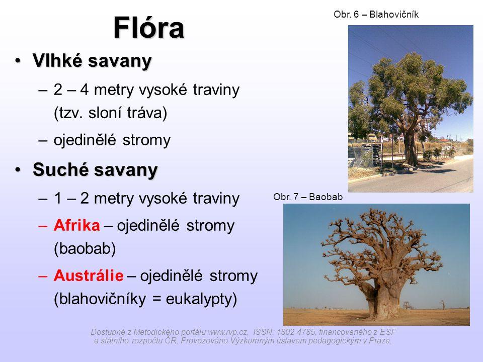 Flóra Vlhké savanyVlhké savany –2 – 4 metry vysoké traviny (tzv.