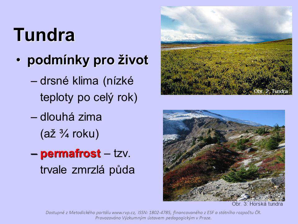 Tundra podmínky pro životpodmínky pro život –drsné klima (nízké teploty po celý rok) –dlouhá zima (až ¾ roku) –permafrost –permafrost – tzv. trvale zm