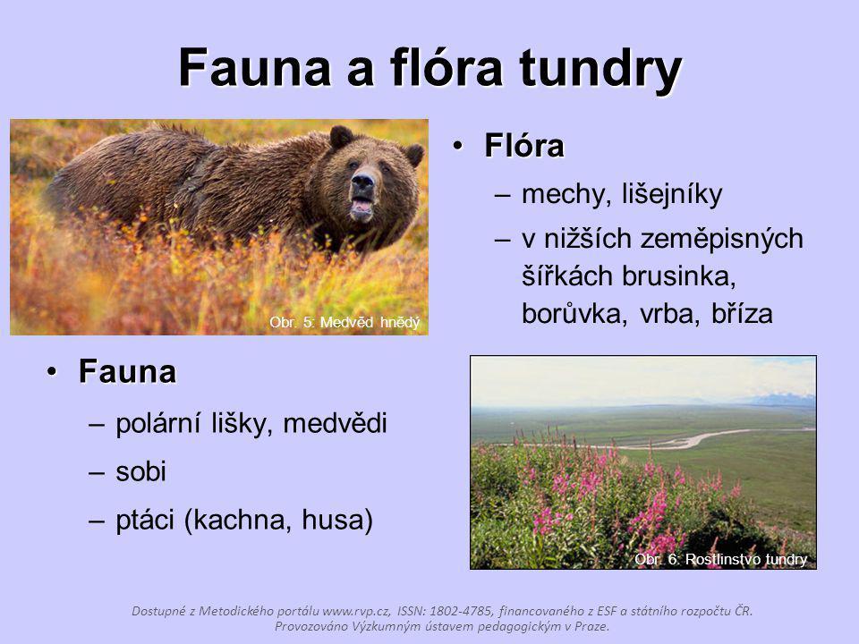 Fauna a flóra tundry FaunaFauna –polární lišky, medvědi –sobi –ptáci (kachna, husa) FlóraFlóra –mechy, lišejníky –v nižších zeměpisných šířkách brusin