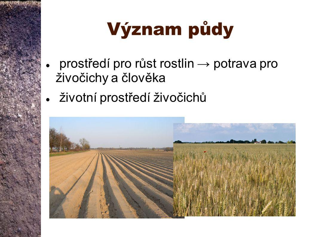 Význam půdy prostředí pro růst rostlin → potrava pro živočichy a člověka životní prostředí živočichů