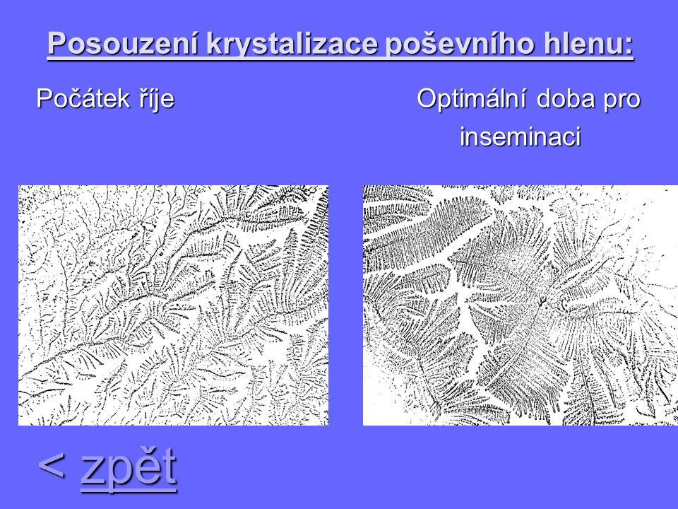 Posouzení krystalizace poševního hlenu: Počátek říje Optimální doba pro Počátek říje Optimální doba pro inseminaci inseminaci < zpět zpět zpět