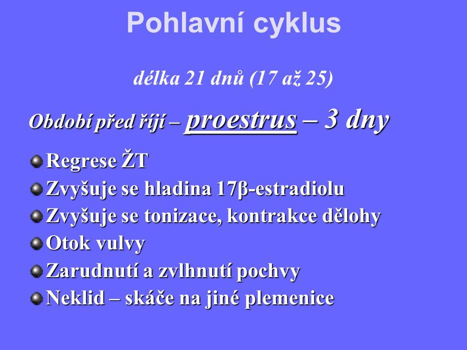 Pohlavní cyklus délka 21 dnů (17 až 25) Období před říjí – proestrus – 3 dny Regrese ŽT Zvyšuje se hladina 17β-estradiolu Zvyšuje se tonizace, kontrakce dělohy Otok vulvy Zarudnutí a zvlhnutí pochvy Neklid – skáče na jiné plemenice