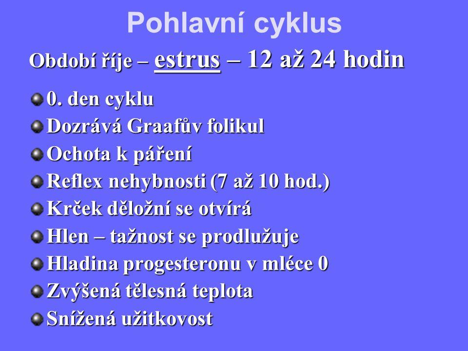 Období říje – estrus – 12 až 24 hodin 0. den cyklu Dozrává Graafův folikul Ochota k páření Reflex nehybnosti (7 až 10 hod.) Krček děložní se otvírá Hl