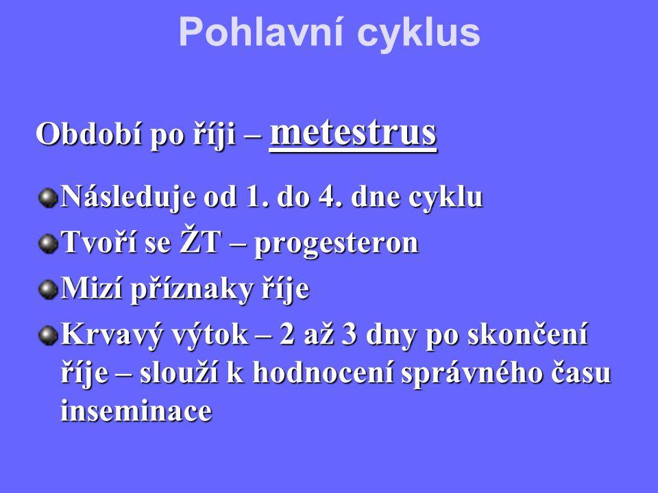 Období po říji – metestrus Následuje od 1. do 4. dne cyklu Tvoří se ŽT – progesteron Mizí příznaky říje Krvavý výtok – 2 až 3 dny po skončení říje – s