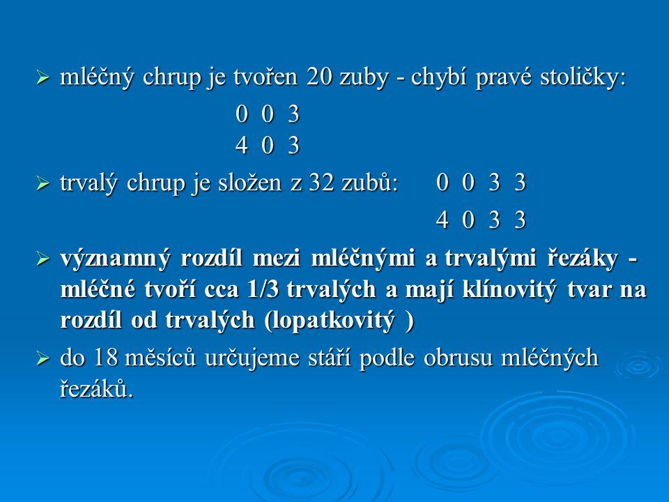  mléčný chrup je tvořen 20 zuby - chybí pravé stoličky: 0 0 3 4 0 3  trvalý chrup je složen z 32 zubů:0 0 3 3 4 0 3 3 4 0 3 3  významný rozdíl mezi
