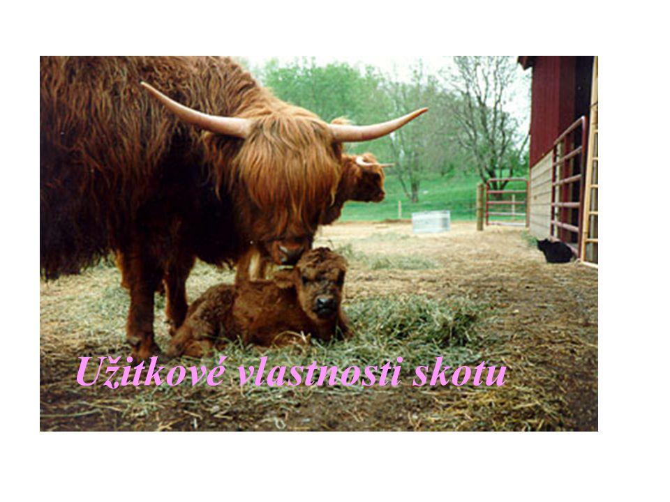Kategorie těl jatečného skotu Tele (TE) – nad 2 týdny, do 150 kg mladý skot (MS) – nad 150 kg, do 12 měsíců mladý býk (A) – do 24 měsíců býk (B) – nad 24 měsíců vůl (C), kráva (D), jalovice (E) -po zařazení do kategorie se stanoví třída zmasilosti (S,E,U,R,O,P) a protučnělosti (1,2,3,4,5) -vyznačí se na JUT – písmena a číslice (20 mm) na obě přední kližky, příp.