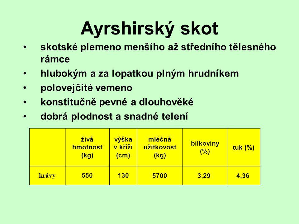 Ayrshirský skot skotské plemeno menšího až středního tělesného rámce hlubokým a za lopatkou plným hrudníkem polovejčité vemeno konstitučně pevné a dlo