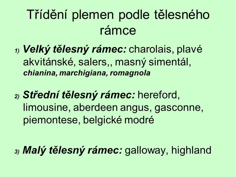 Třídění plemen podle tělesného rámce 1) Velký tělesný rámec: charolais, plavé akvitánské, salers,, masný simentál, chianina, marchigiana, romagnola 2)