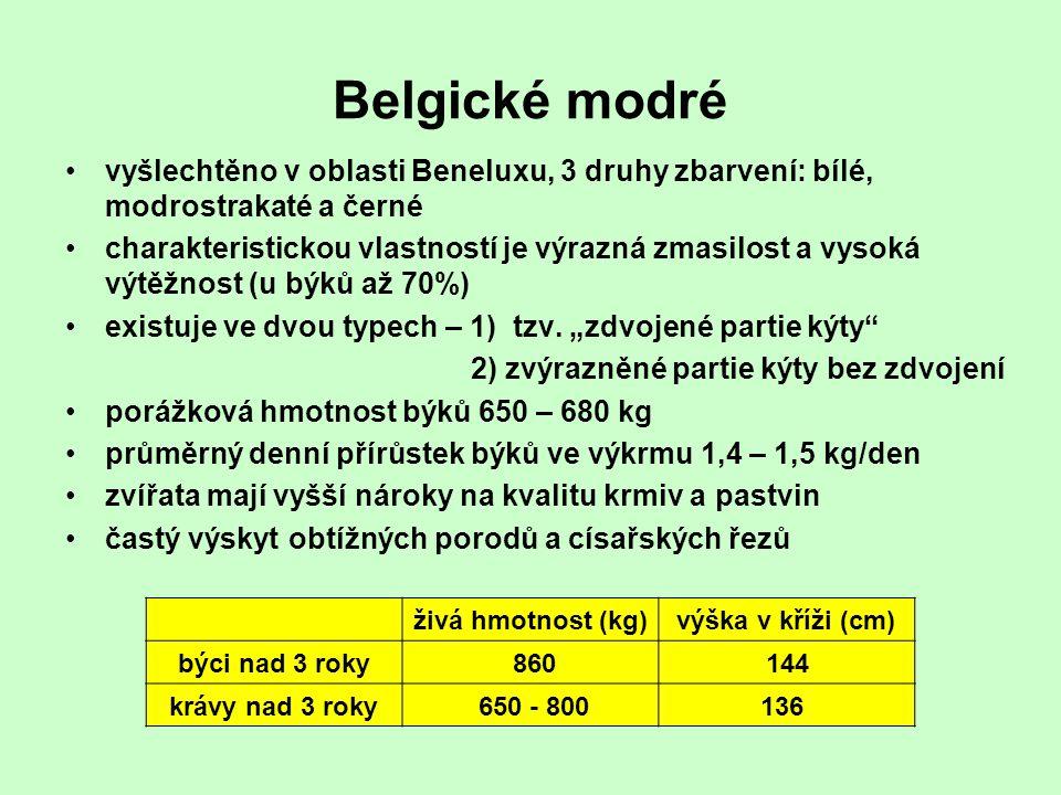 Belgické modré vyšlechtěno v oblasti Beneluxu, 3 druhy zbarvení: bílé, modrostrakaté a černé charakteristickou vlastností je výrazná zmasilost a vysok