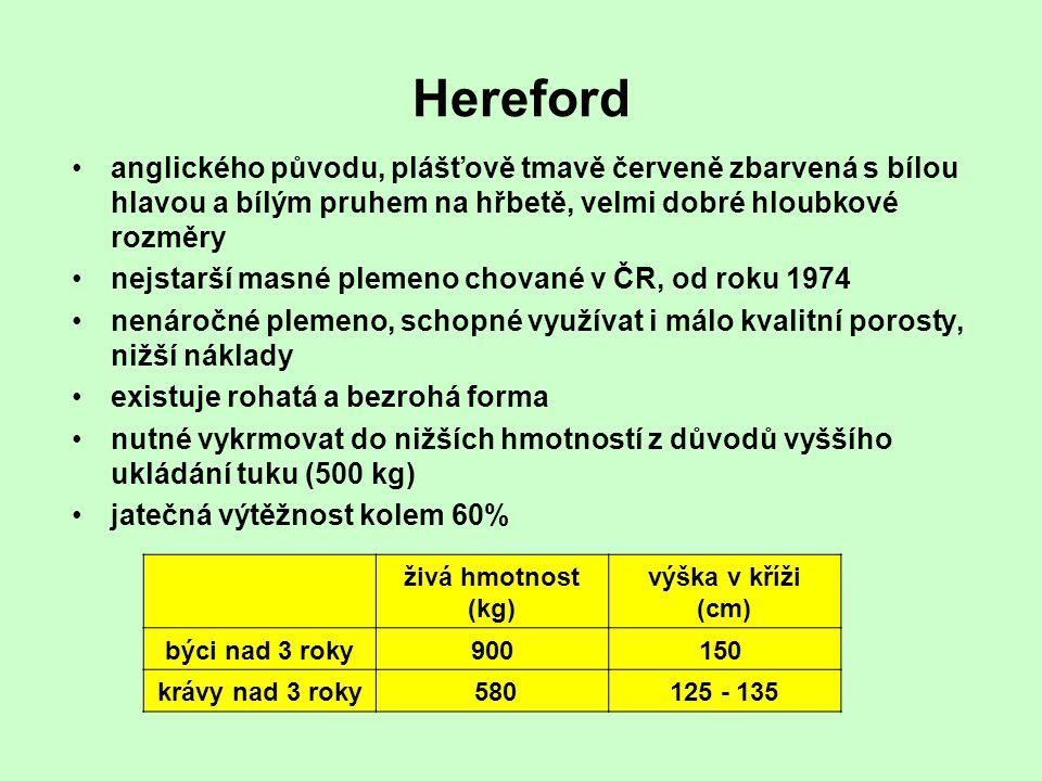Hereford anglického původu, plášťově tmavě červeně zbarvená s bílou hlavou a bílým pruhem na hřbetě, velmi dobré hloubkové rozměry nejstarší masné ple