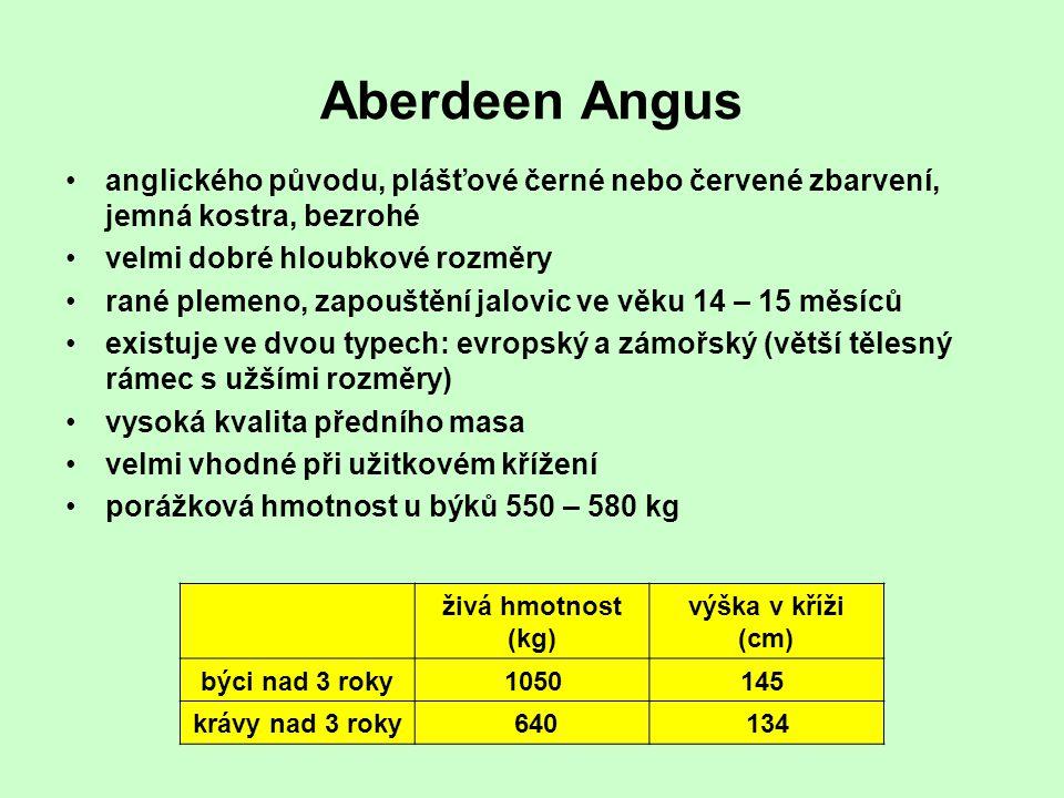 Aberdeen Angus anglického původu, plášťové černé nebo červené zbarvení, jemná kostra, bezrohé velmi dobré hloubkové rozměry rané plemeno, zapouštění j
