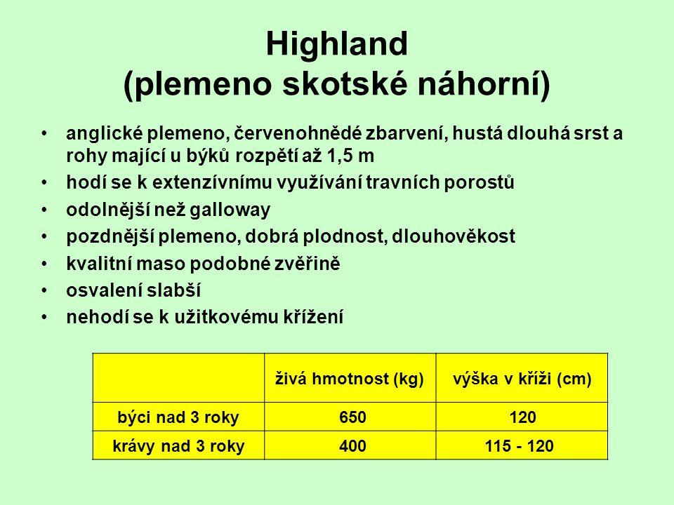 Highland (plemeno skotské náhorní) anglické plemeno, červenohnědé zbarvení, hustá dlouhá srst a rohy mající u býků rozpětí až 1,5 m hodí se k extenzív