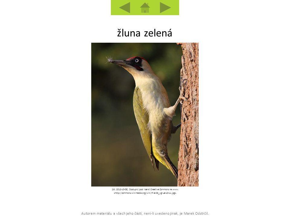 Autorem materiálu a všech jeho částí, není-li uvedeno jinak, je Marek Odstrčil. žluna zelená [cit. 2012-10-08]. Dostupný pod licencí Creative Commons