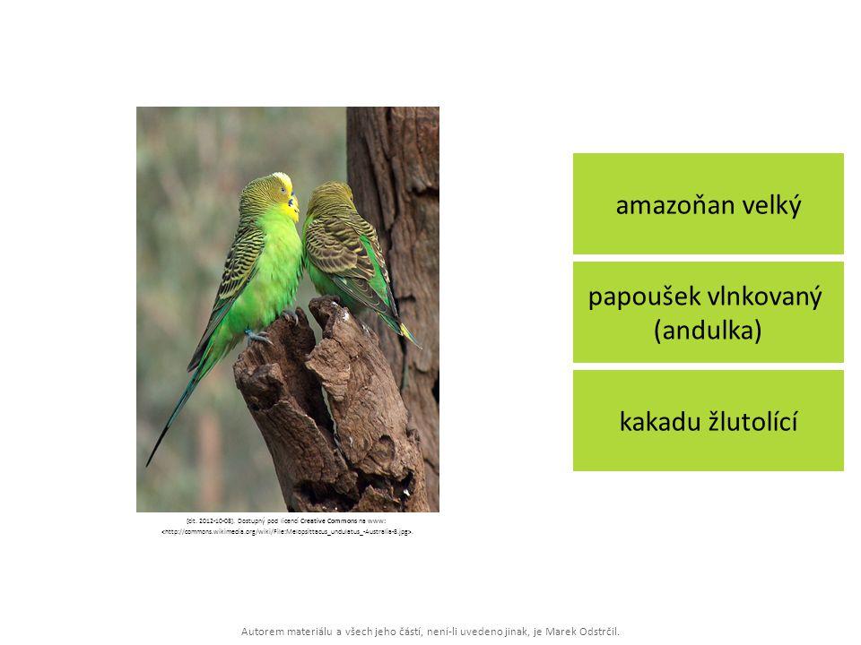 Autorem materiálu a všech jeho částí, není-li uvedeno jinak, je Marek Odstrčil. amazoňan velký kakadu žlutolící papoušek vlnkovaný (andulka) [cit. 201