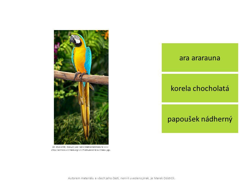 Autorem materiálu a všech jeho částí, není-li uvedeno jinak, je Marek Odstrčil. ara ararauna papoušek nádherný korela chocholatá [cit. 2012-10-08]. Do