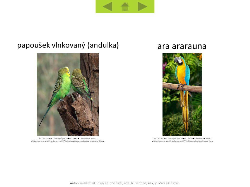 Autorem materiálu a všech jeho částí, není-li uvedeno jinak, je Marek Odstrčil. ara ararauna papoušek vlnkovaný (andulka) [cit. 2012-10-08]. Dostupný