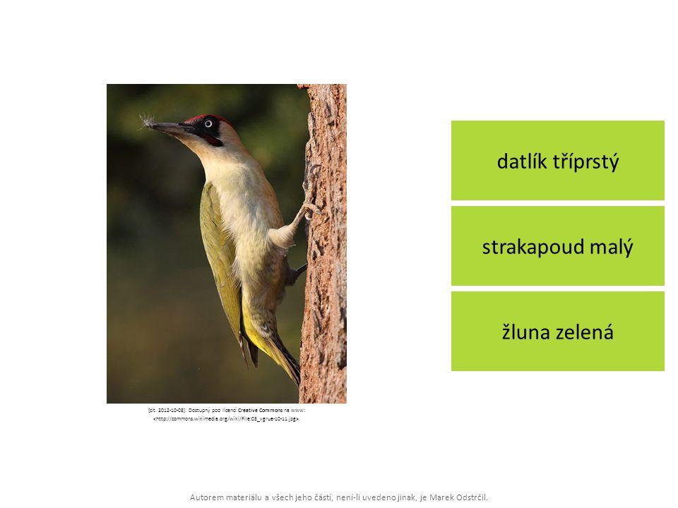 Autorem materiálu a všech jeho částí, není-li uvedeno jinak, je Marek Odstrčil. datlík tříprstý žluna zelená strakapoud malý [cit. 2012-10-08]. Dostup