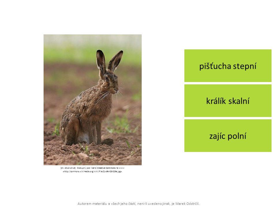 Autorem materiálu a všech jeho částí, není-li uvedeno jinak, je Marek Odstrčil. pišťucha stepní zajíc polní králík skalní [cit. 2012-10-18]. Dostupný