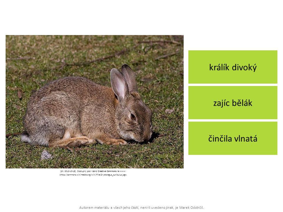 Autorem materiálu a všech jeho částí, není-li uvedeno jinak, je Marek Odstrčil. králík divoký činčila vlnatá zajíc bělák [cit. 2012-10-18]. Dostupný p