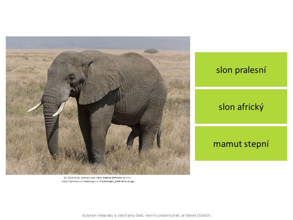 Autorem materiálu a všech jeho částí, není-li uvedeno jinak, je Marek Odstrčil. slon pralesní mamut stepní slon africký [cit. 2012-10-18]. Dostupný po