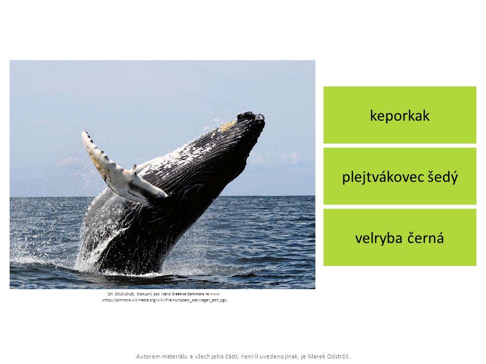 Autorem materiálu a všech jeho částí, není-li uvedeno jinak, je Marek Odstrčil. keporkak velryba černá plejtvákovec šedý [cit. 2012-10-18]. Dostupný p