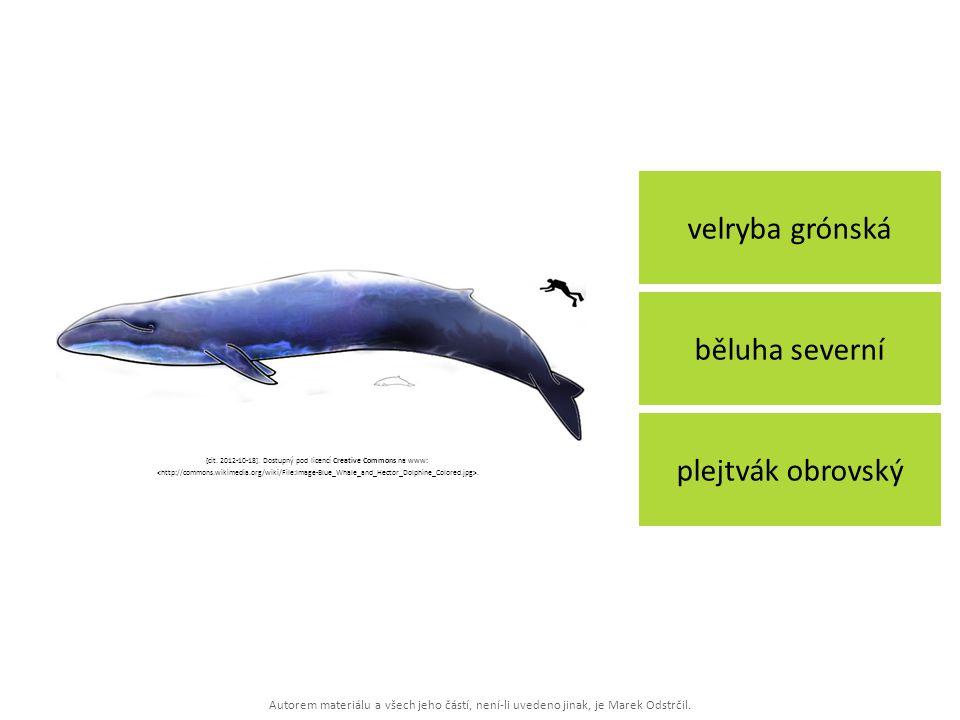 Autorem materiálu a všech jeho částí, není-li uvedeno jinak, je Marek Odstrčil. velryba grónská plejtvák obrovský běluha severní [cit. 2012-10-18]. Do