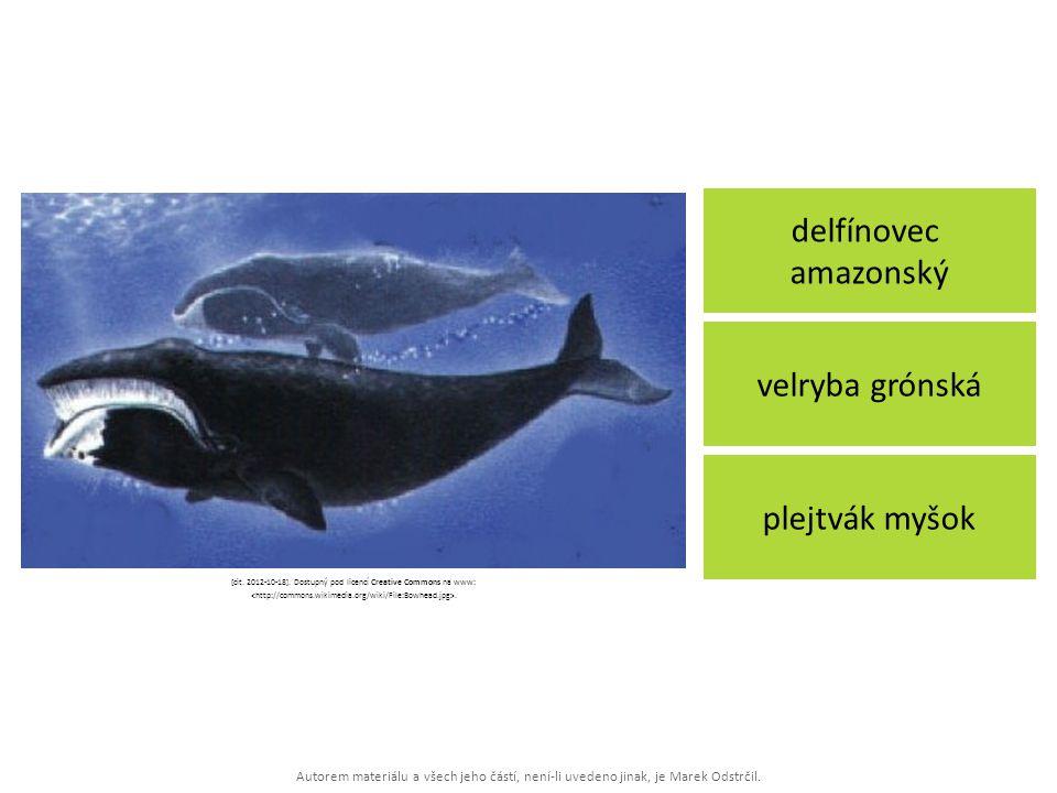 Autorem materiálu a všech jeho částí, není-li uvedeno jinak, je Marek Odstrčil. delfínovec amazonský plejtvák myšok velryba grónská [cit. 2012-10-18].