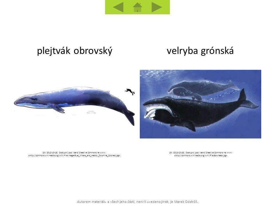 Autorem materiálu a všech jeho částí, není-li uvedeno jinak, je Marek Odstrčil. velryba grónskáplejtvák obrovský [cit. 2012-10-18]. Dostupný pod licen