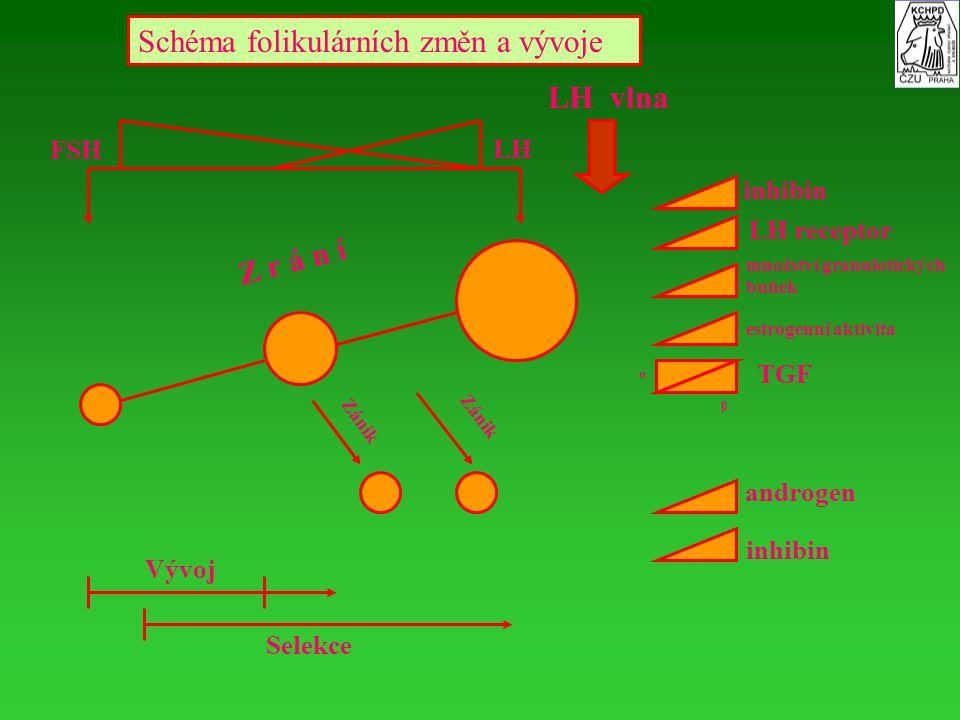 Schéma folikulárních změn a vývoje Selekce LH FSH LH vlna Z r á n í inhibin LH receptor TGF androgen α β Zánik Vývoj množství granulotických buňek est