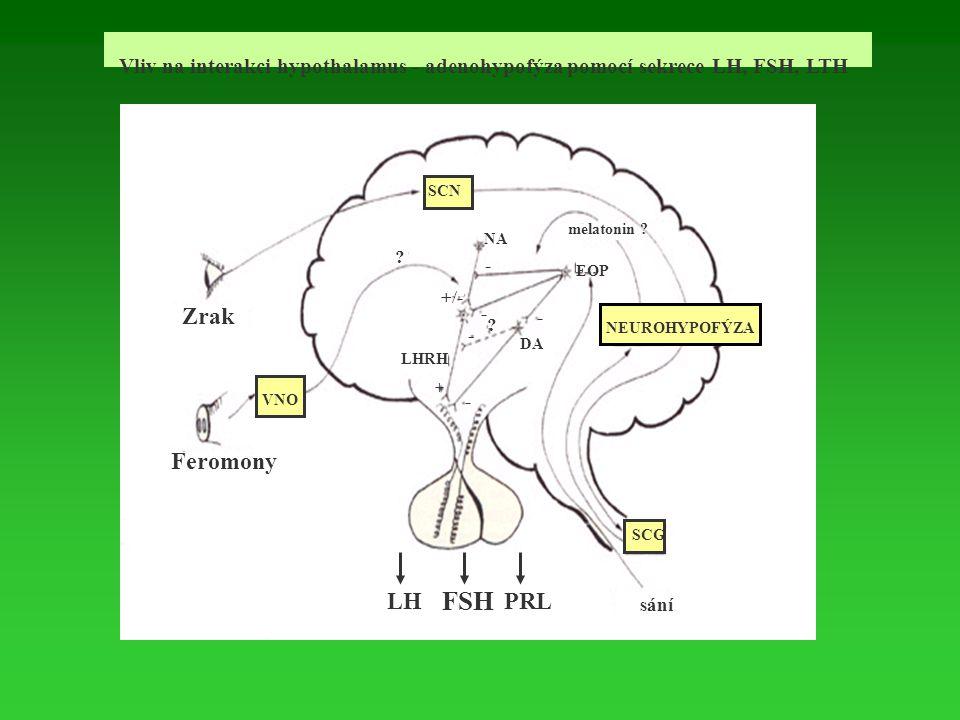 Vliv na interakci hypothalamus - adenohypofýza pomocí sekrece LH, FSH, LTH Feromony LH FSH PRL Zrak melatonin ? LHRH SCN NA EOP VNO DA SCG ? sání NEUR