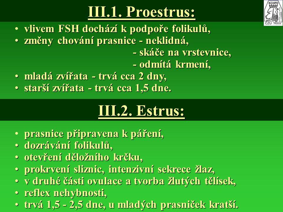III.1. Proestrus: vlivem FSH dochází k podpoře folikulů, změny chování prasnice - neklidná, změny chování prasnice - neklidná, - skáče na vrstevnice,