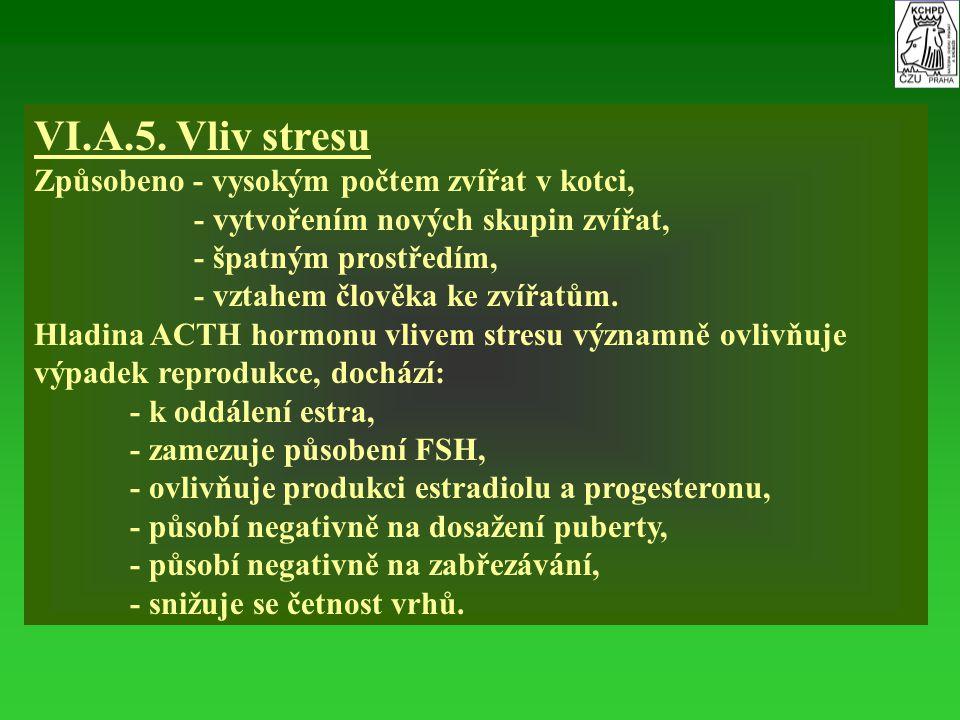 VI.A.5. Vliv stresu Způsobeno - vysokým počtem zvířat v kotci, - vytvořením nových skupin zvířat, - špatným prostředím, - vztahem člověka ke zvířatům.