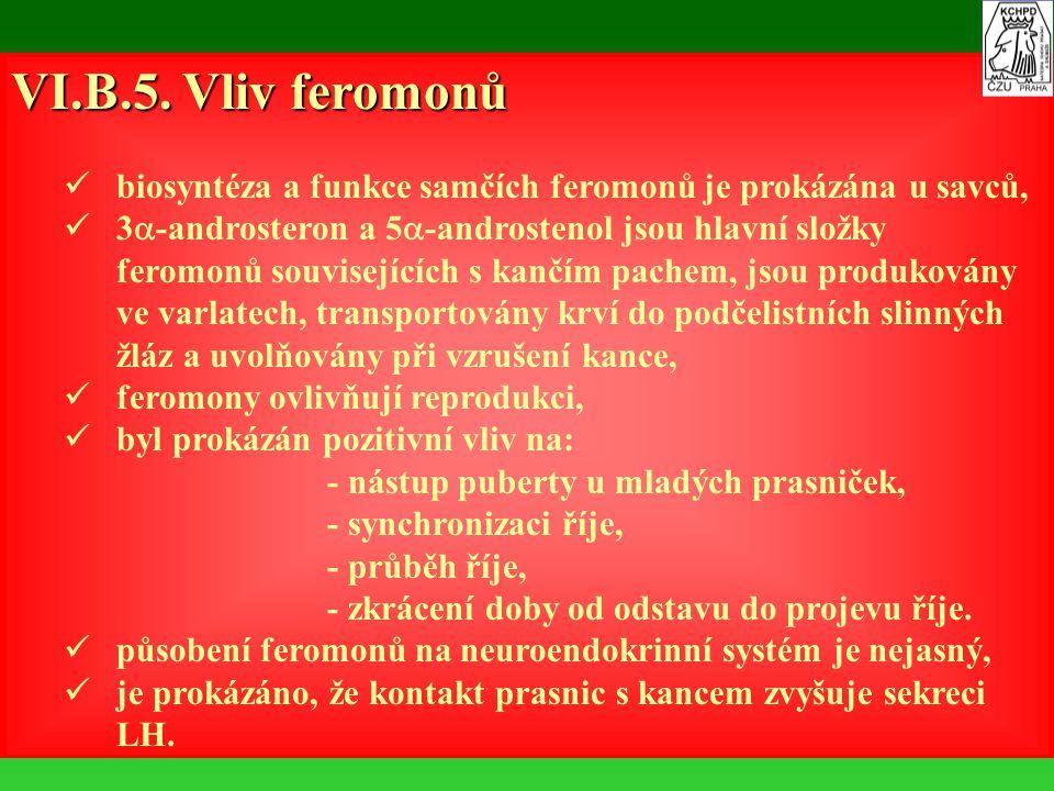 VI.B.5. Vliv feromonů biosyntéza a funkce samčích feromonů je prokázána u savců, 3  -androsteron a 5  -androstenol jsou hlavní složky feromonů souvi